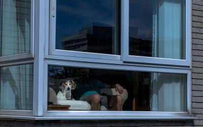 Life Windows (pets)